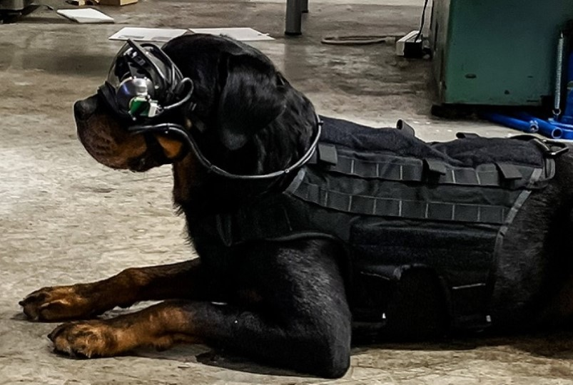 augmented reality is going to the dogs