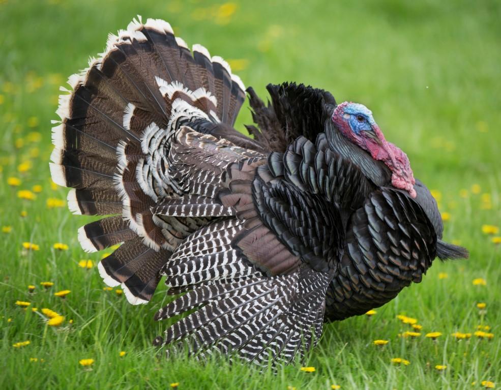 turkey-suppy-chain
